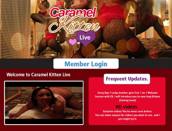 Discount Caramel Kitten Live